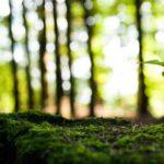 प्रकृति की रक्षा कैसे करें ?